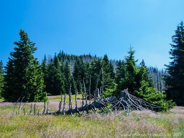 Baum vor Abzweig