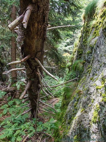 Hörndl Wilder Wald