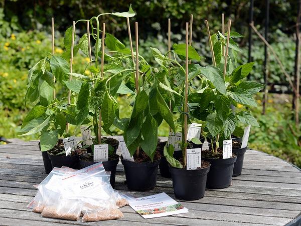 Chilipflanzen von Pepperworld