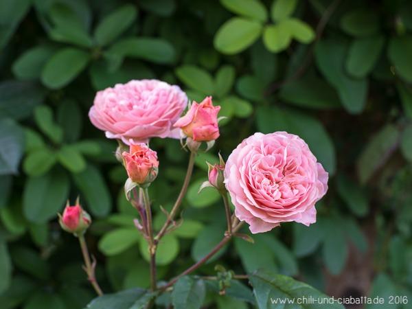 Rose Leander
