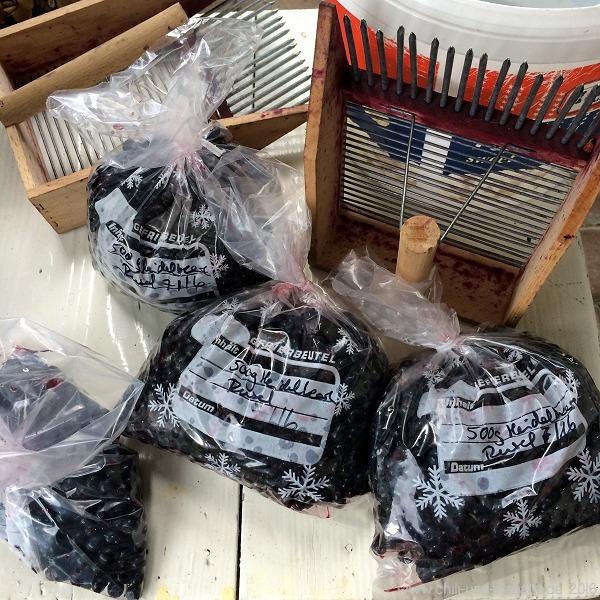 1,7 kg Heidelbeeren