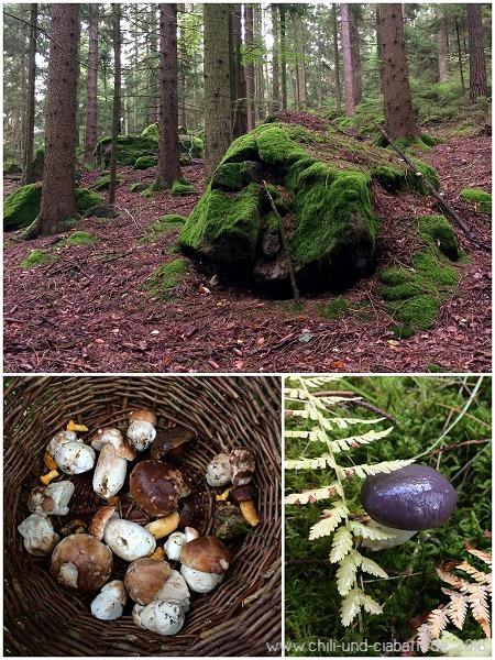 Pilzsuche beim Nulldorfer