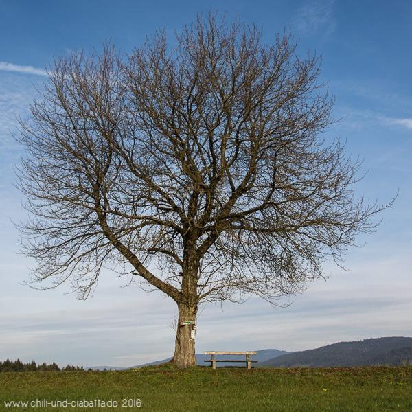 Jahreszeitenbaum im November