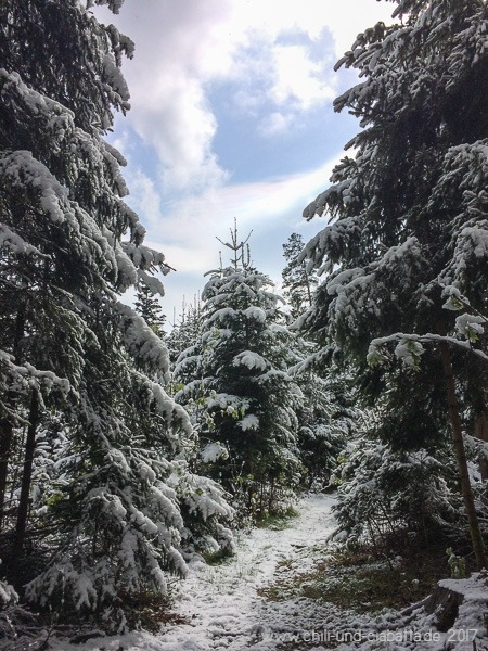 Winterwald im April