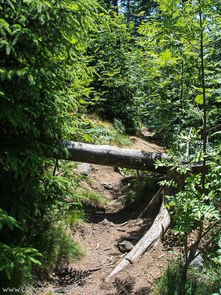 Weg mit Baumstamm