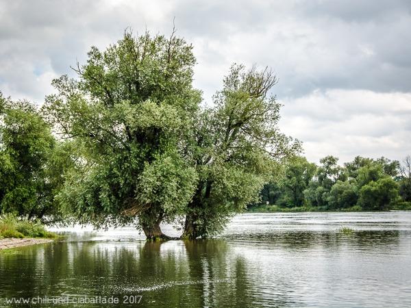 Baum in Donau
