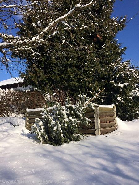 ausgemusterter Weihnachtsbaum