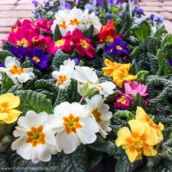 Frühlingsbblüher