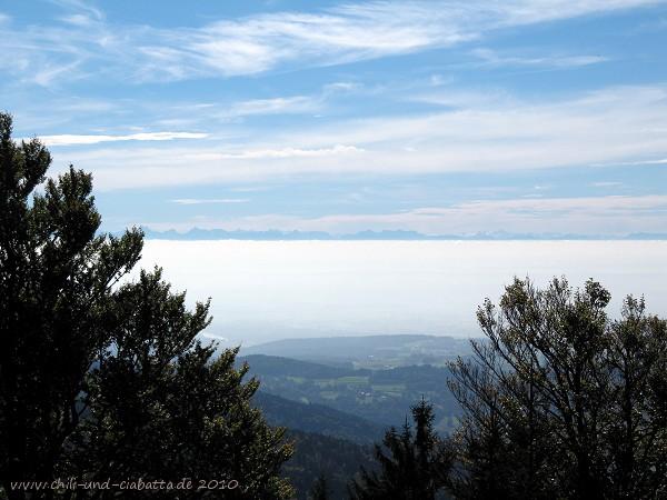 Alpenblick vom Dreitannenriegel