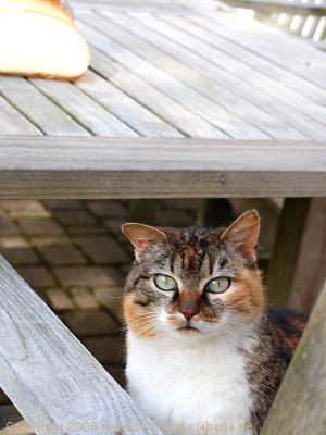 Katze vor Brot