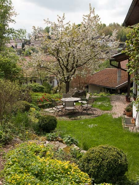 Garten mit Kirschblüte