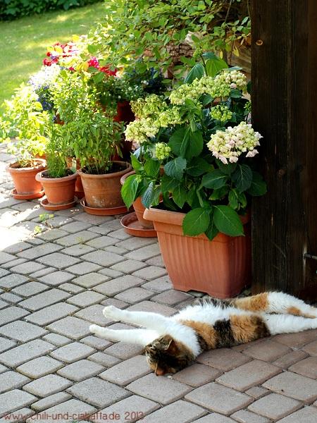 Hitze: alles macht schlapp