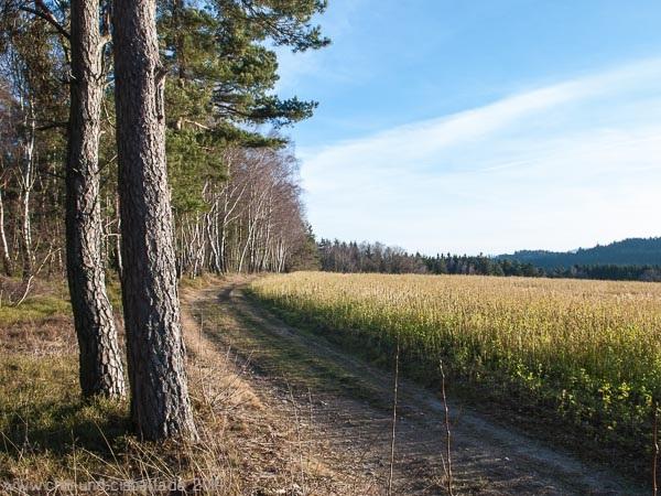 Pfahlwanderweg