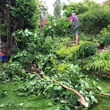 Gartenarbeit Auslichten