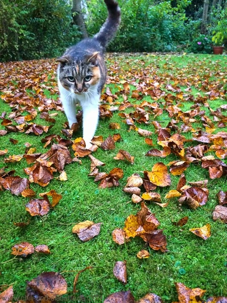 Katze auf Herbstlaub
