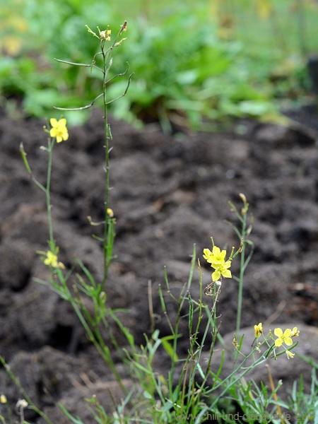 umgegrabenes Beet