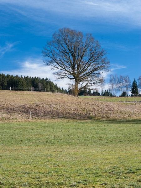 In den Teisnach-Auen