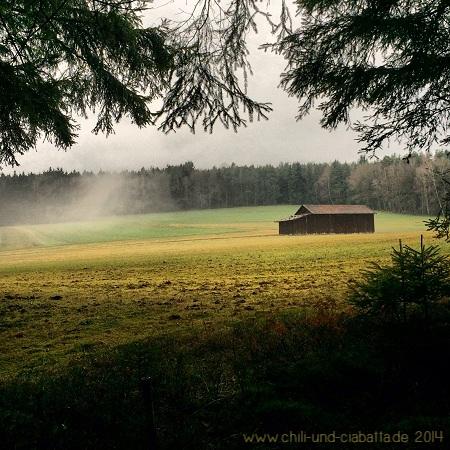 Lichtung mit Nebel
