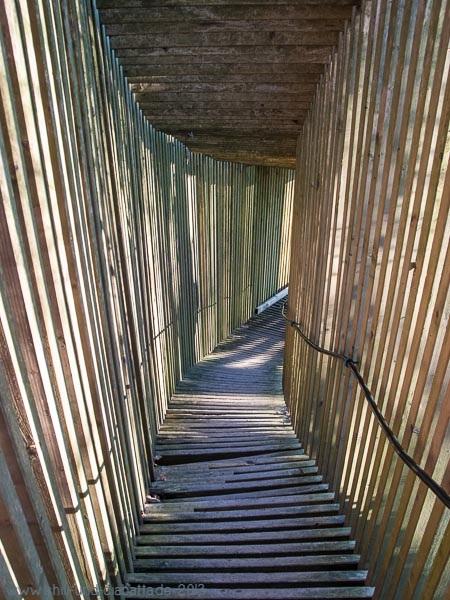 Licht-Schatten-Tunnel im Zauberwald