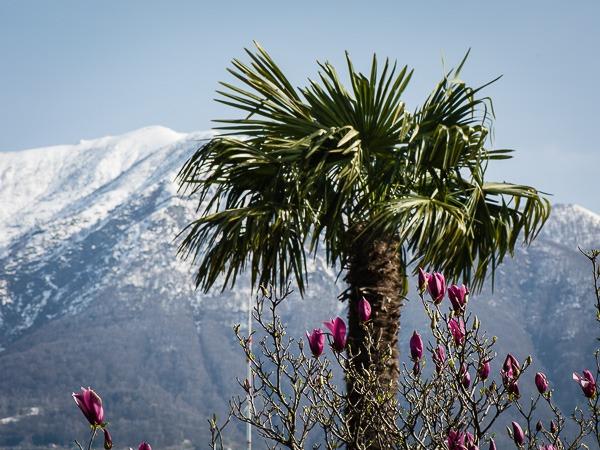 Palmen und Schneeberge
