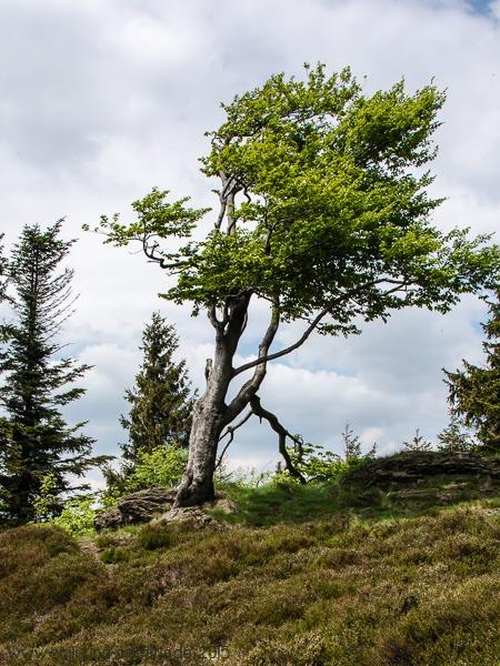 """""""Baum"""