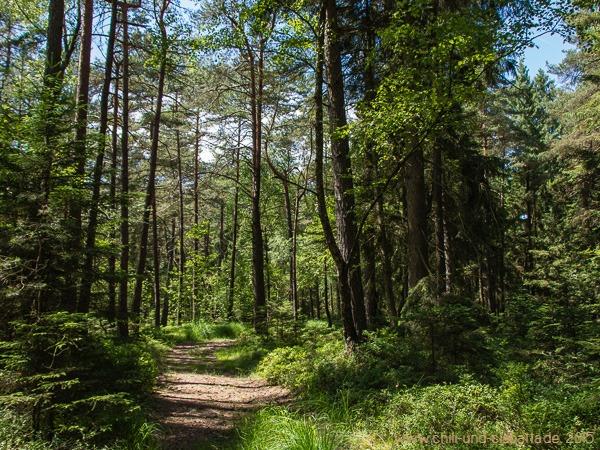 Pitterer Wald