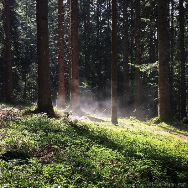 Dampfender Waldboden