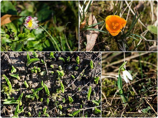 erste Frühlingssboten