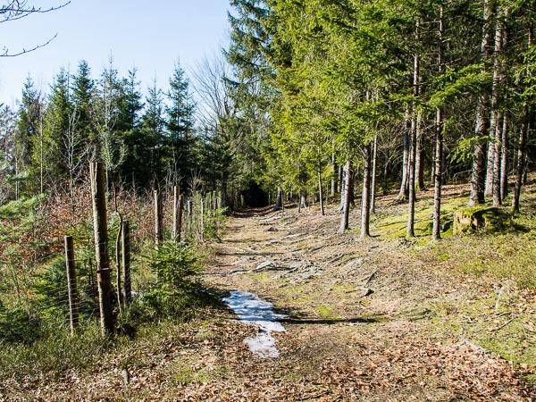 Waldkapellenweg