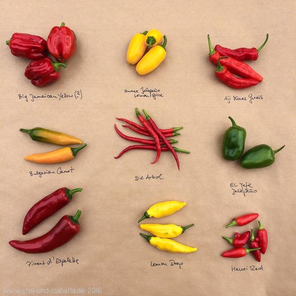 Chilis aus der Ernte 2016