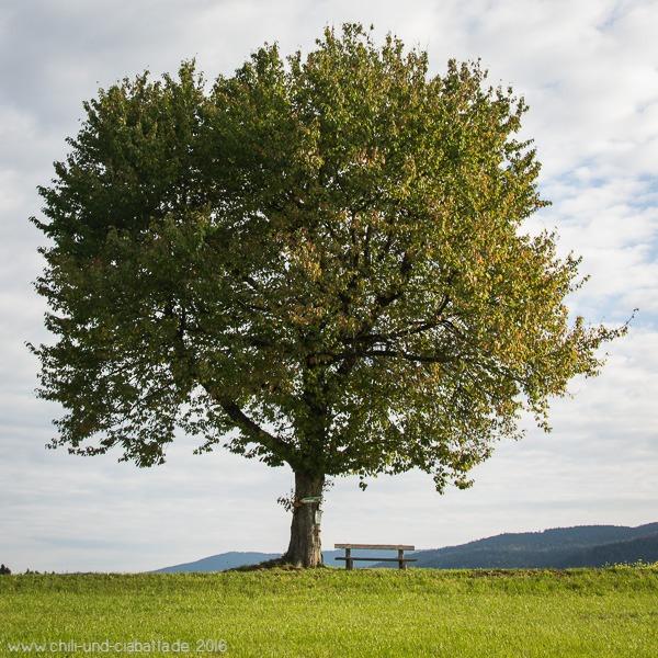 Jahreszeitenbaum Im September