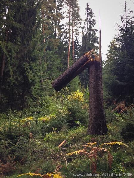 Eins Baum
