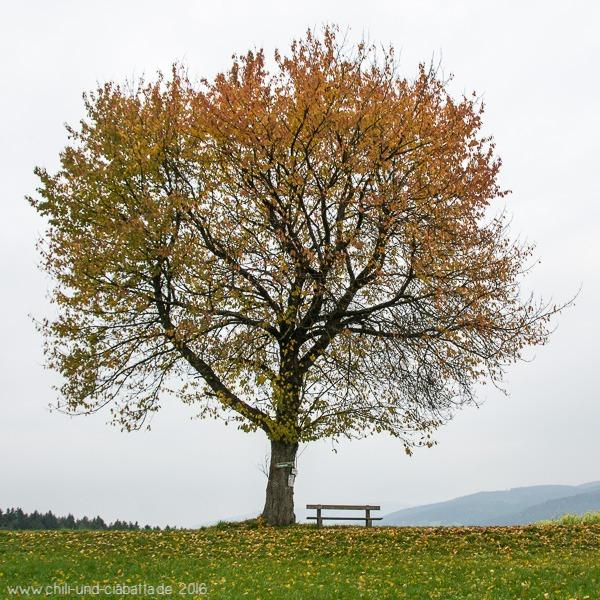 Jahreszeitenbaum im Oktober