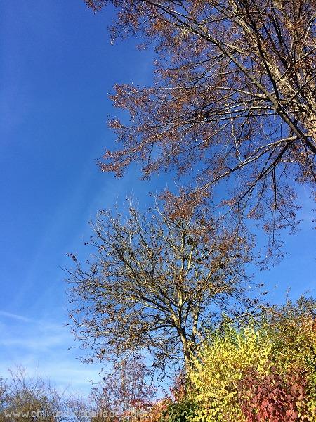 Walnuss im Herbst