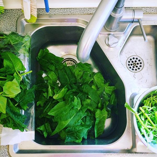 Spinat putzen für Gründonnerstag
