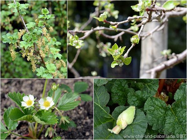 Blüten im Nutzgarten