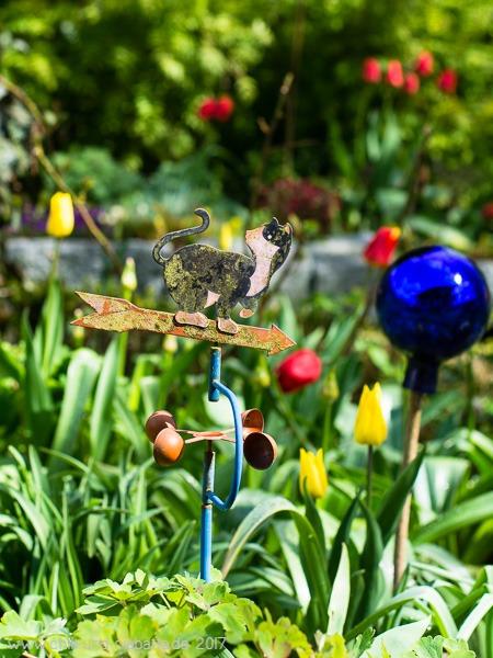 Tulpen-Beet