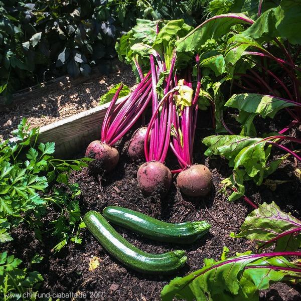 Rote Bete und Zucchini vom Hochbeet
