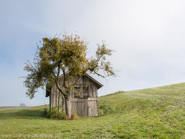 Schuppen mit Baum