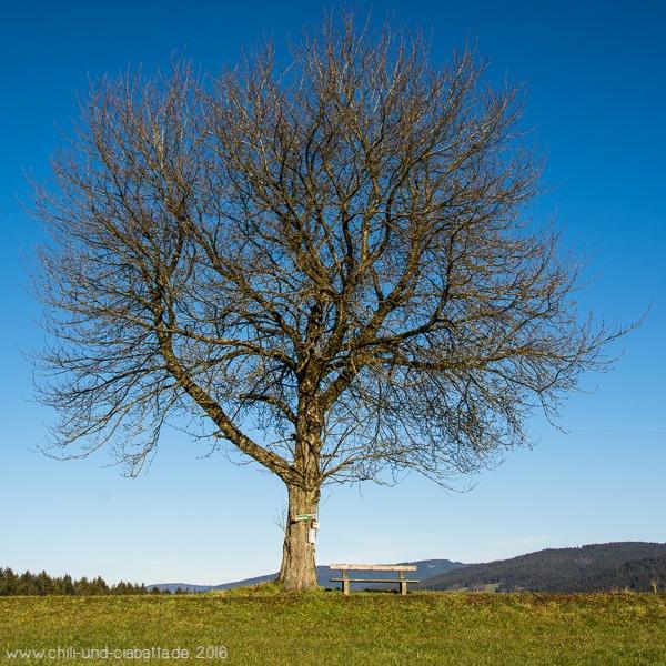 Der Jahreszeitenbaum im Dezember