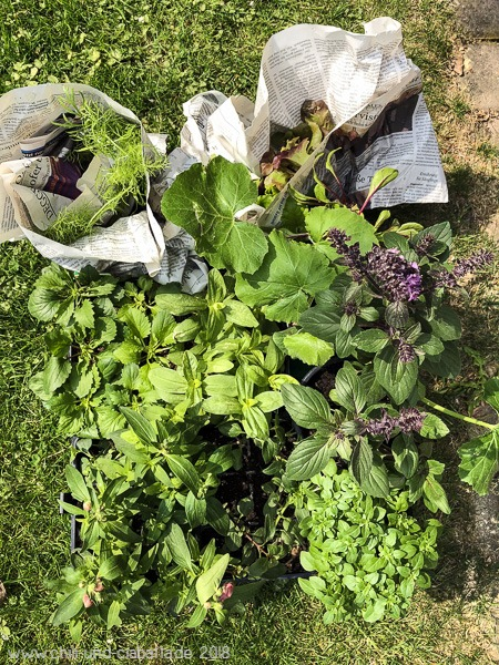 Pflanzenkauf