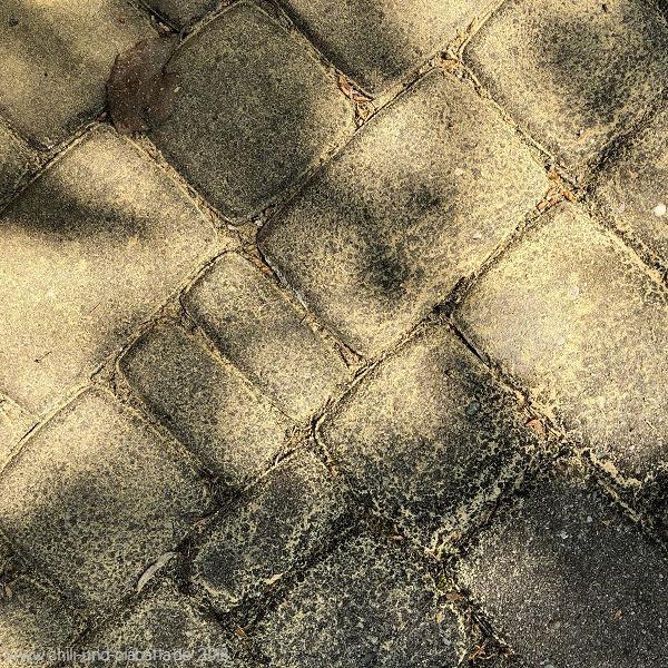 Pollenstaub