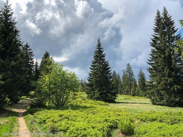 Heidelbeerfelder