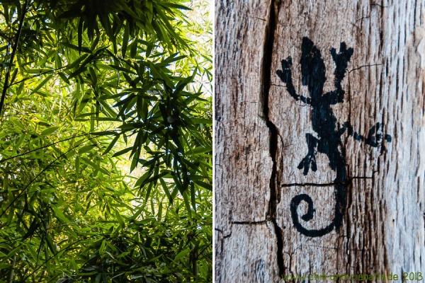 Bambus und Eidechse