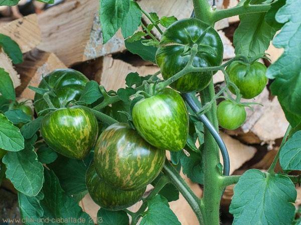 Tomaten Schwarze Zebra