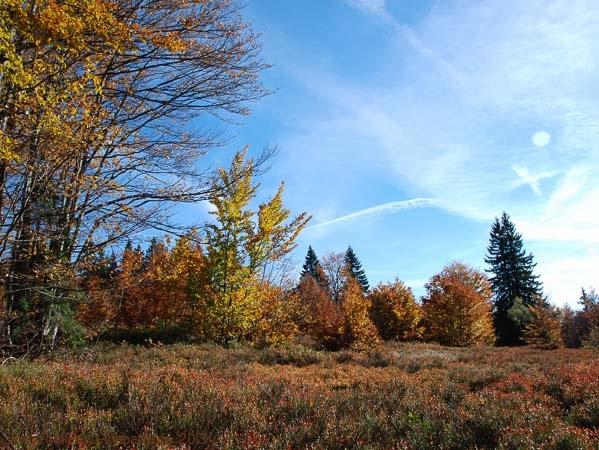 Schachtenwanderung - Herbstfärbung