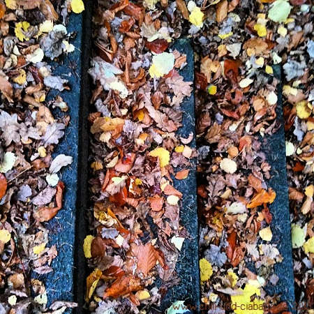 Herbsttreppe