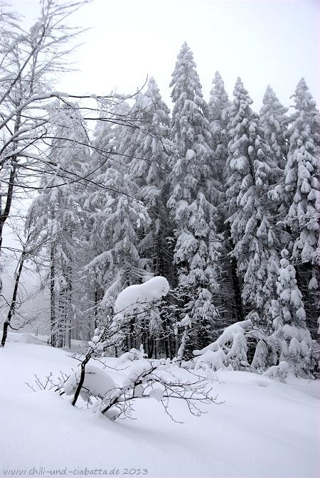 Schneeschuhtour Arberhochstr. - Drachenfliegerschanze