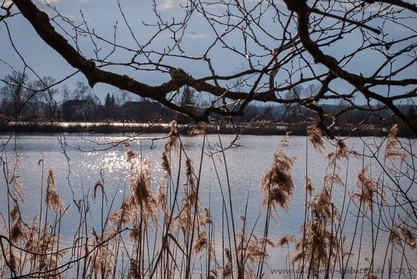 alte Kiesweiher bei Aholming