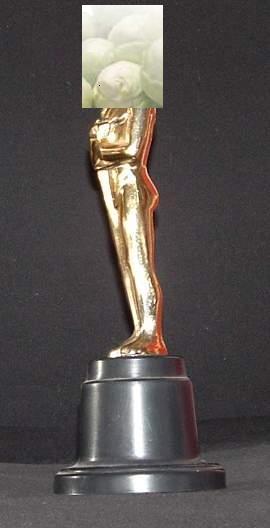 Oscar für das Garten-Koch-Event Kohl